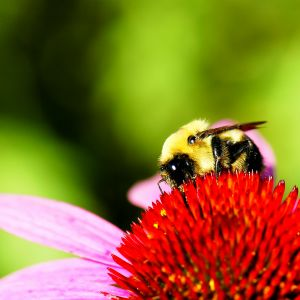Organic Bee Pollen in Folligenix
